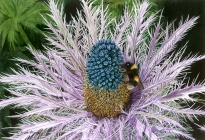 Sea Holly and Bee _Sarah Wood
