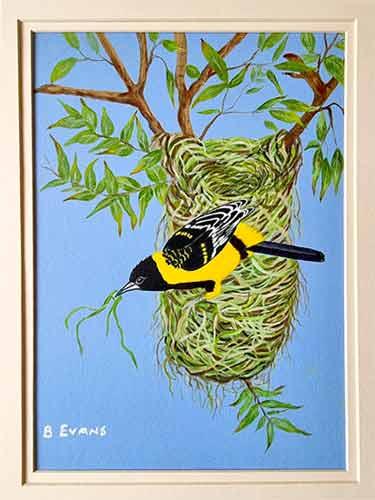 Mask Weaver in nest