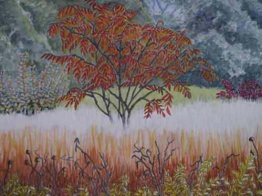 Sumach Tree in Autumn